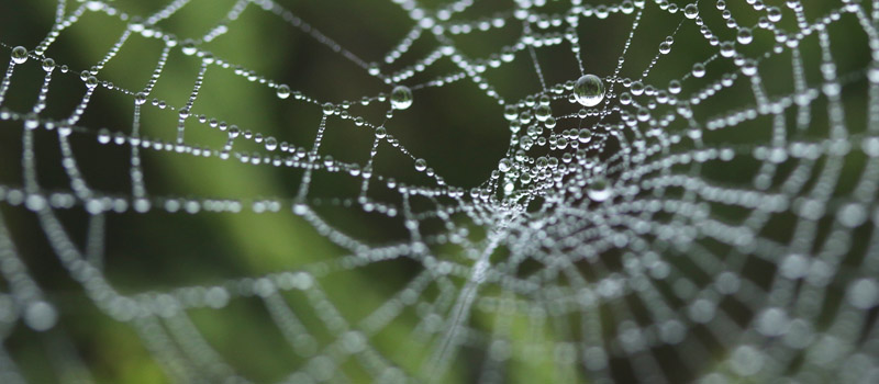 The Regulatory Web of Complexity